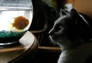 Fascinate cat