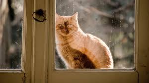 Powerlessness Cat